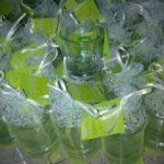 gelas bening sablon