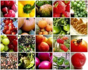 tips-memilih-buah-dan-sayur-dari-maheswari-catering-jogja